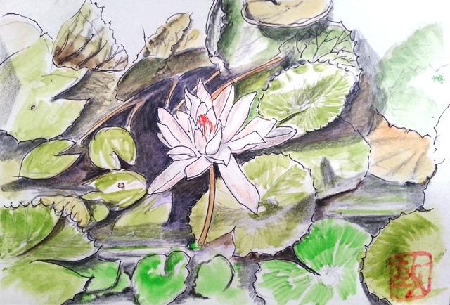 一輪の美しい蓮の絵手紙