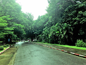 雨で生気を取り戻した木々